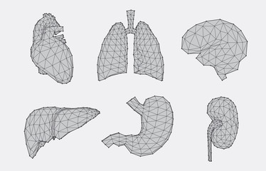 Set of geometric anatomy