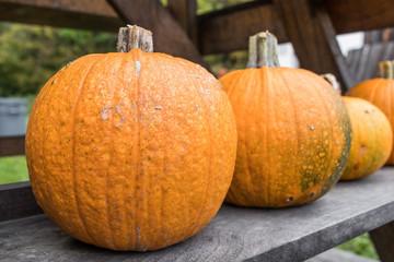 A close up of a row of pumpkins on a shelf