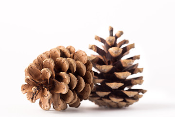 Pine cones isolated on white background. Christmas decoration. Winter. Evergreen