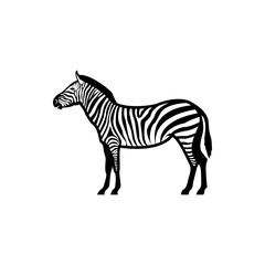 Vector zebra silhouette view side for retro logos, emblems, badges, labels template vintage design element. Isolated on white background