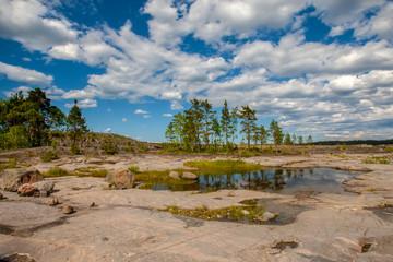 Pine trees grow on stones. Karelia. Russia. Ladoga lake. A sunny day in Karelia.