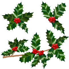 Set of Isolated Holly Leaves Berries and Branch. Colorful Christmas Decoration in Cartoon Style. Vector Illustration