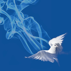flying white pigeon on a blue background