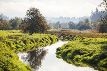 River or Creek in Lush Landscape