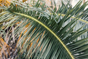 palm tree, close up