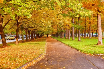 Beautiful alley of golden maple trees near the Moscow University campus