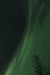 Northern Lights Overhead