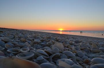 Sonnenuntergang mit Muscheln