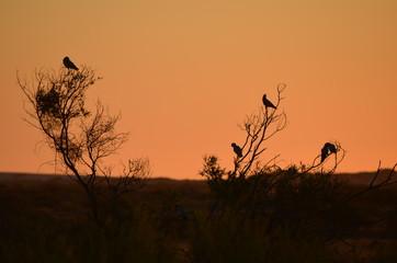 Abendsonne mit Papagaien