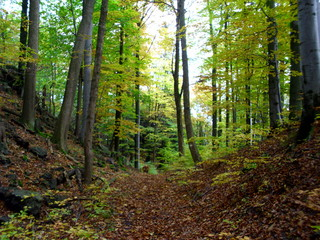 jesienny las w górach Suchych