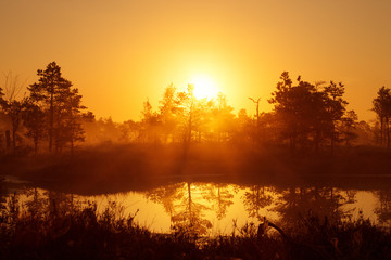 Foggy sunrise in the coniferous forest above the marshes