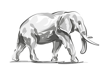 Vector digital sketch of an elephant
