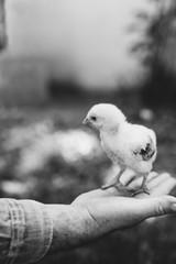 Man holding chick