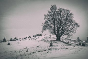 A lonely branchy tree on the hill. Winter landscape. Old photo effect.