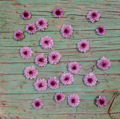 Spring flowers on green worn wood