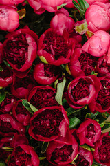 A group of red peonies at the flower market