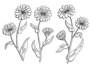 Calendula flower graphic black white isolated sketch illustration vector