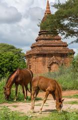 Horses graze near the old temples of Bagan, Myanmar (Burma)