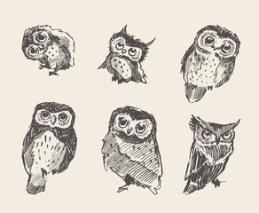 Deurstickers Uilen cartoon Set vector drawn owls vintage style