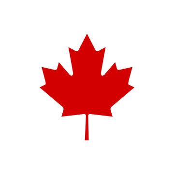 Canada maple leaf icon vector simple