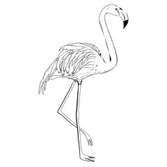 Flamingo vector illustration. Doodle style. Isolated on white background. Flamingo hand draw. Cloth, print, design, icon, logo, poster, textile, paper, card, cloth, wrapping, wallpaper. Eps10