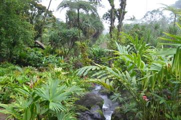 Végétation luxuriante de la jungle du Costa Rica