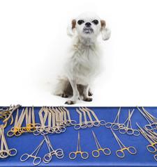 Veterinary, surgery, medicine, pet, animals, health care concept