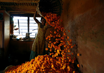A woman unloads marigold flowers used to make garlands and offer prayers, in Kathmandu