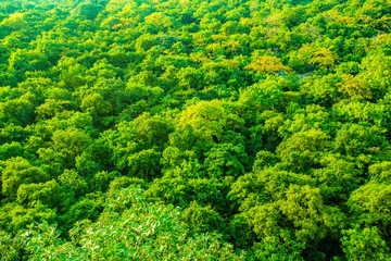 Evergreen Forest or Tropical Forest Background.