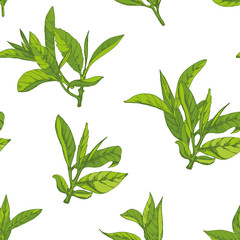 seamless pattern with herbs, vector illustration hand-drawn  leaves and branches of tea