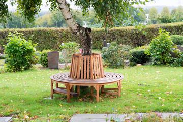 Runde Holzbank um einer Birke