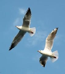 Чайки в небе 2