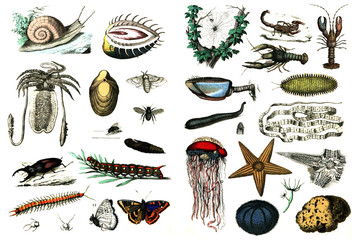 Collection of fauna on a white background.