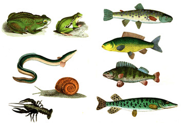 The inhabitants of the rivers.
