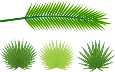 Set of different green leaves of palm trees on white background