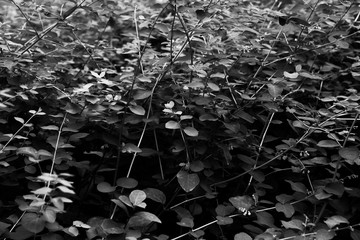 Abstract black and white background with leaves