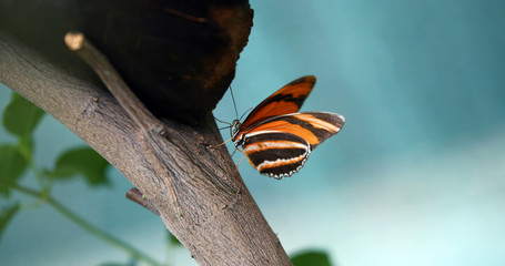 Picture of beautiful colorful butterfly on tree