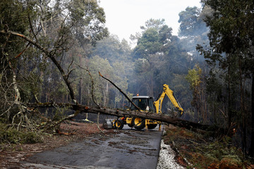 An excavator tries to remove a tree from a road after a forest fire near Marinha Grande