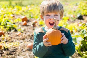 adorable toddler boy picking pumpkin during fall autumn season