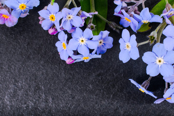close-up of Myosotis or forget-me-nots on stone background with copy space. macro spring and summer border template floral. mockup greeting and holiday card.