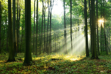 Papiers peints Forets Forest landscape