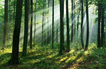 Papiers peints Foret Forest landscape