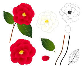 White and Red Camellia Flower Outline. isolated on White Background. Vector Illustration.