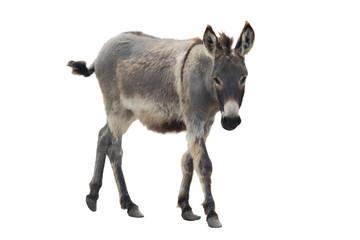 Autocollant pour porte Ane Donkey