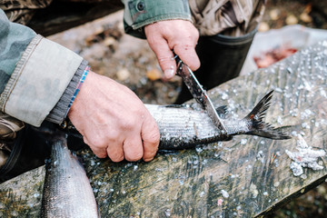 Fisherman cleaning fish on wooden board outdoors
