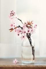 Cherry blossom on a window sill