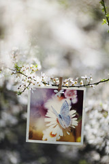 Hanging photography on tree branch with wooden peg