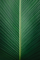Beautiful Dark Green Tropical Leaf Texture