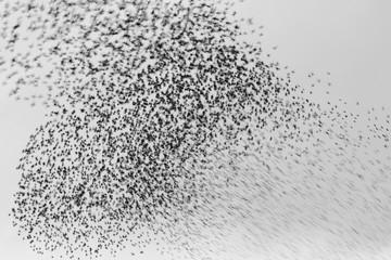Starling abstract art