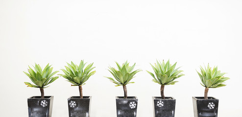 Five plants in gray plantpot with snowflake printing in front of white wall